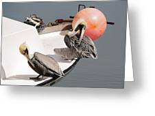 Pelicans Greeting Card by Paulette Thomas