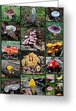 Pennsylvania Mushrooms Collage 2 Greeting Card by Mother Nature
