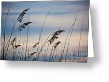 Pensacola Beach Sea Oats Greeting Card by Steven Gray