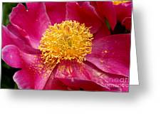 Peony Abstract Greeting Card by Valerie Fuqua
