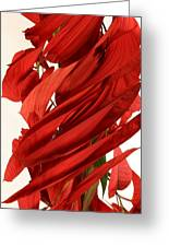 Peripheral Streak Image Of A Poinsettia Greeting Card by Ted Kinsman
