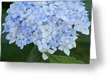 Periwinkle Blue Hydrangea Greeting Card by Bonnie Bruno