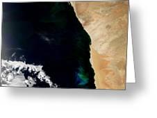 Phytoplankton Bloom Off Nambia Greeting Card by NASA