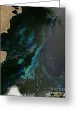 Phytoplankton Off Argentinas Coast Greeting Card by Nasa