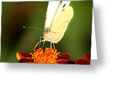 Pieris Brassicae Greeting Card by Emanuel Tanjala