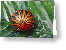 Pill Millipede Glomeris Sp Rolled Greeting Card by Cyril Ruoso