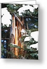 Pine Bark Greeting Card by Lisa  Spencer