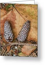 Pine Cones And Leaves Greeting Card by Deborah Benoit