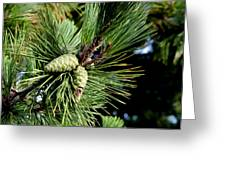 Pine Cones In A Pine Tree Greeting Card by Bill Cannon
