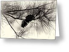 Pine Cones In The Treetops Greeting Card by Douglas Barnard