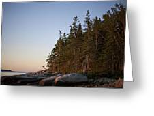 Pine Trees Along The Rocky Coastline Greeting Card by Hannele Lahti