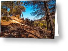Pine Trees In El Chorro. Spain Greeting Card by Jenny Rainbow