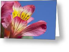 Pink and Blue Greeting Card by Al Hurley