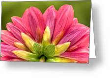 Pink And Green Greeting Card by Al Hurley