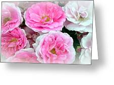 Pink And White Rose Melody Greeting Card by Chantal PhotoPix