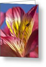 Pink Blue 2 Greeting Card by Al Hurley