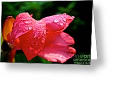 Pink Canna Lily Greeting Card by Susan Herber
