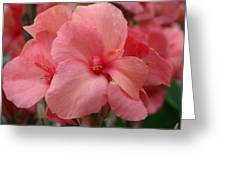 Pink Canna Greeting Card by Paul Slebodnick