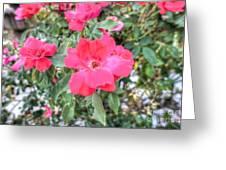 Pink Eye Greeting Card by Will Cardoso