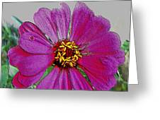 Pink Flower Greeting Card by Lisa  Ridgeway