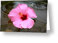 Pink Flower Greeting Card by Snow  White