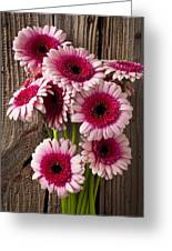 Pink Gerbera Daisies Greeting Card by Garry Gay