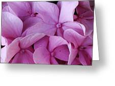 Pink Hydrangea Up Close Greeting Card by Bruce Bley