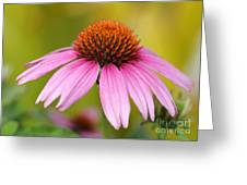 Pink Is In Greeting Card by Sabrina L Ryan