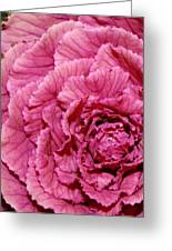 Pink Kale Greeting Card by Bruce Bley