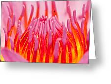 Pink Lotus In Thailand Greeting Card by Chatchawin Jampapha