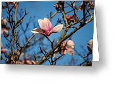 Pink Magnolia Flower Greeting Card by Jai Johnson
