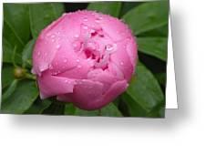Pink Peony Greeting Card by Josie Dupuis