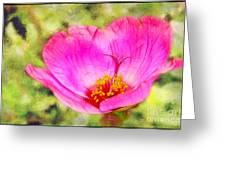 Pink Portulaca Greeting Card by Judi Bagwell