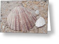 Pink Scallop Shell Greeting Card by Kimberly Perry