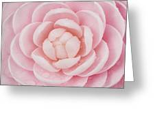 Pink Up Close and Personal Greeting Card by Rich Franco