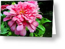 Pink Zinnia Greeting Card by Sandi OReilly