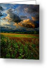 Places In The Heart Greeting Card by Phil Koch