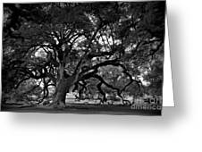 Plantation Oak Tree Greeting Card by Perry Webster