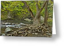 Planted By The Rivers Of Water Greeting Card by Michael Peychich