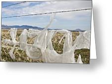 Plastic Garbage Bag On A Wire Fence Greeting Card by Paul Edmondson