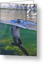 Playful Otter Greeting Card by Kat Besthorn