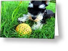 Playing in the Green Grass Greeting Card by Tisha McGee