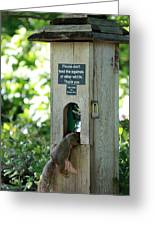 Please Don't Feed The Squirrels Greeting Card by Elizabeth Hart