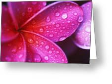 Plumeria Blossom Greeting Card by Ron Dahlquist - Printscapes