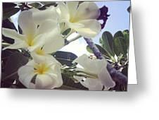 Plumeria Greeting Card by Nawarat Namphon