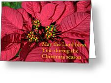 Poinsetta For Christmas Greeting Card by Linda Phelps