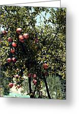 Pomegranate Tree Greeting Card by Granger