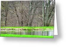 Pond Starts To Grow Greeting Card by Debra     Vatalaro