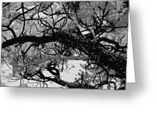 Ponderosa Pine Greeting Card by Rosemarie Hakim