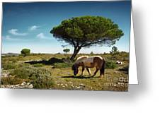Pony Pasturing Greeting Card by Carlos Caetano